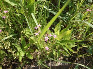 道に咲く小さな花たち